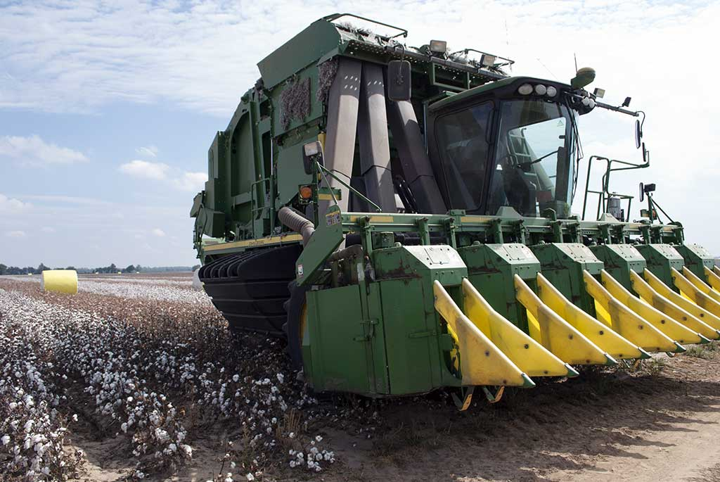 of a large combine driving through cotton fields